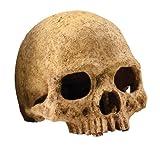 Exoterra Décoration Primat Skull pour Reptiles et Amphibiens 15x16x16 cm