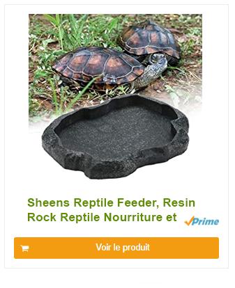 Bac à Nourriture et Eau Bol pour Animaux de Compagnie Terrarium Tortue  Reptile Lezards